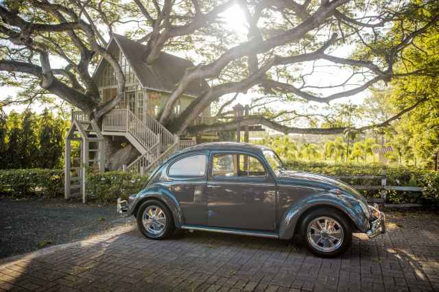 gray volkswagen beetle parking near bushes surrounded with tall and green trees